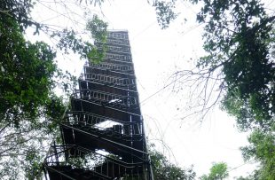canopy-tower-tambopata-mssf